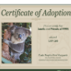 Koala adoption certificate